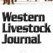 beef industry news